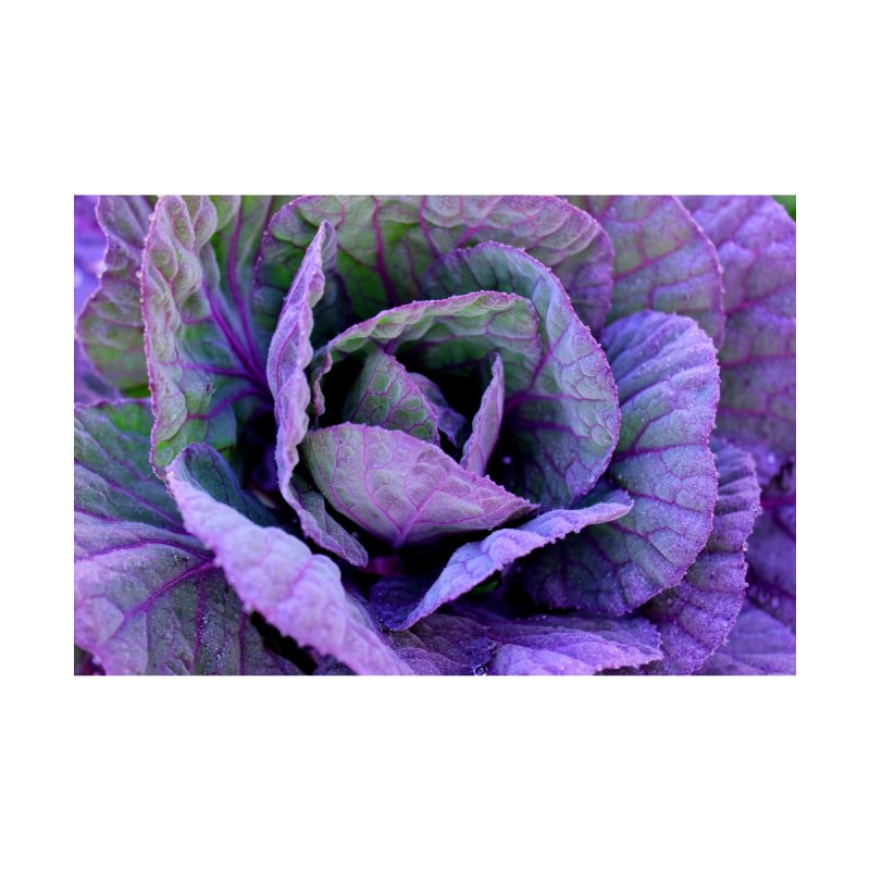 Purple Frost by 3boysenberries
