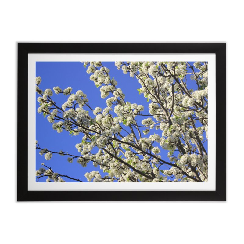 Blue Sky Pear Blossom Home Framed Fine Art Print by 3boysenberries