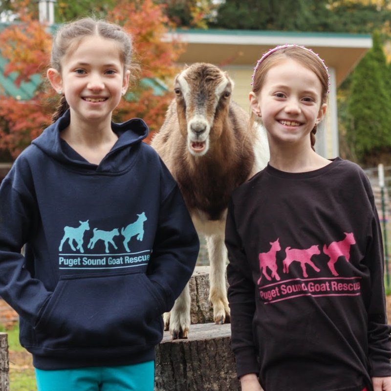 3 Baby Goats - Turquoise by Puget Sound Goat Rescue's Artist Shop