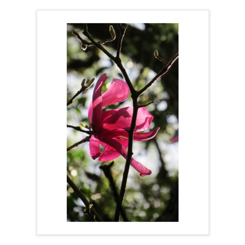Pink Tulip Tree Bloom Home Fine Art Print by ArtsFolly's Artist Shop