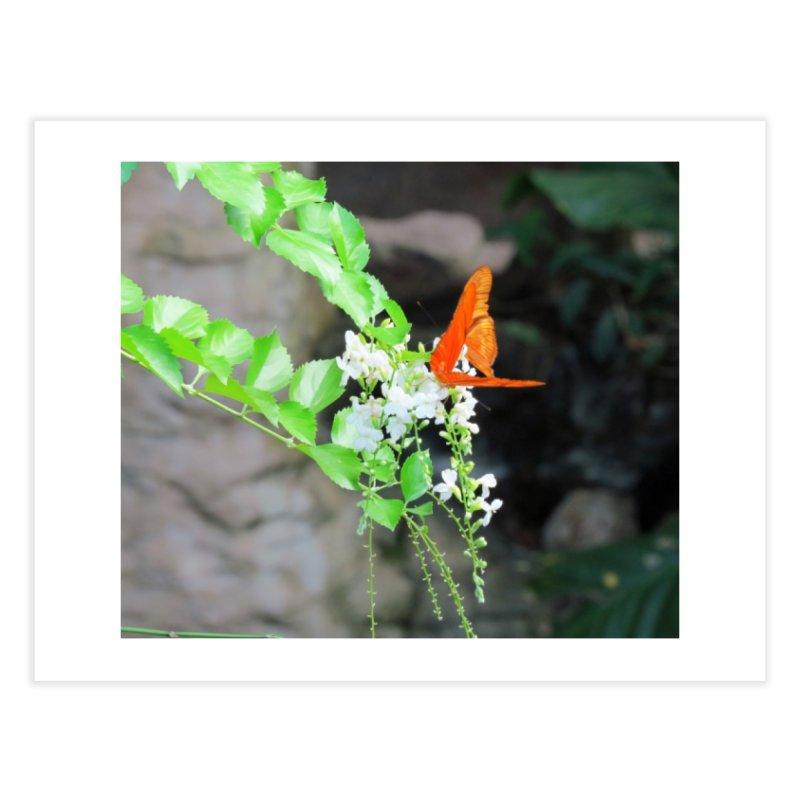 Orange Butterflies on White Flowers  Home Fine Art Print by ArtsFolly's Artist Shop