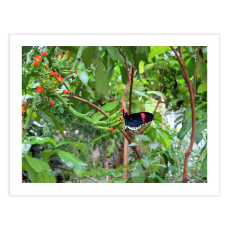 Black and Red Butterfly on Green Home Fine Art Print by ArtsFolly's Artist Shop