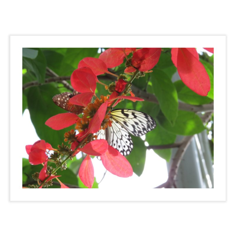 White Butterfly on Red Flowers in the Sun Home Fine Art Print by ArtsFolly's Artist Shop