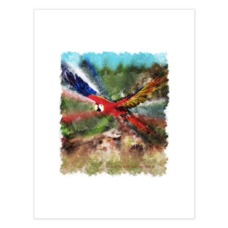 Scarlet Macaw in Flight Home Fine Art Print by Birds on the Brink Sanctuary Shop
