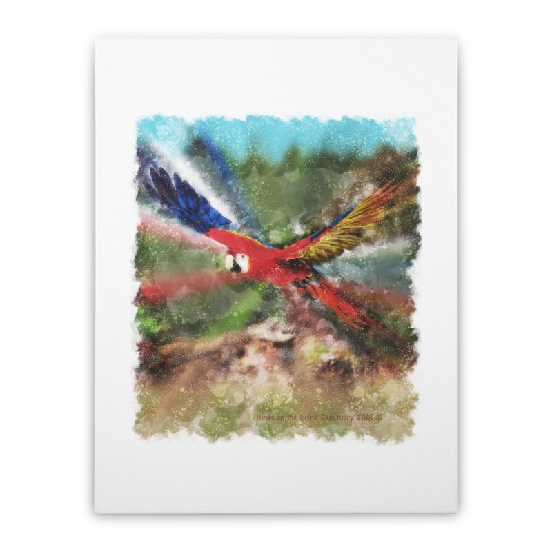 Scarlet Macaw in Flight Home Stretched Canvas by Birds on the Brink Sanctuary Shop
