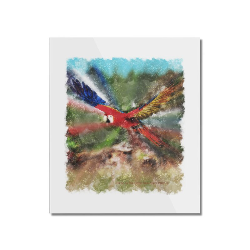Scarlet Macaw in Flight Home Mounted Acrylic Print by Birds on the Brink Sanctuary Shop
