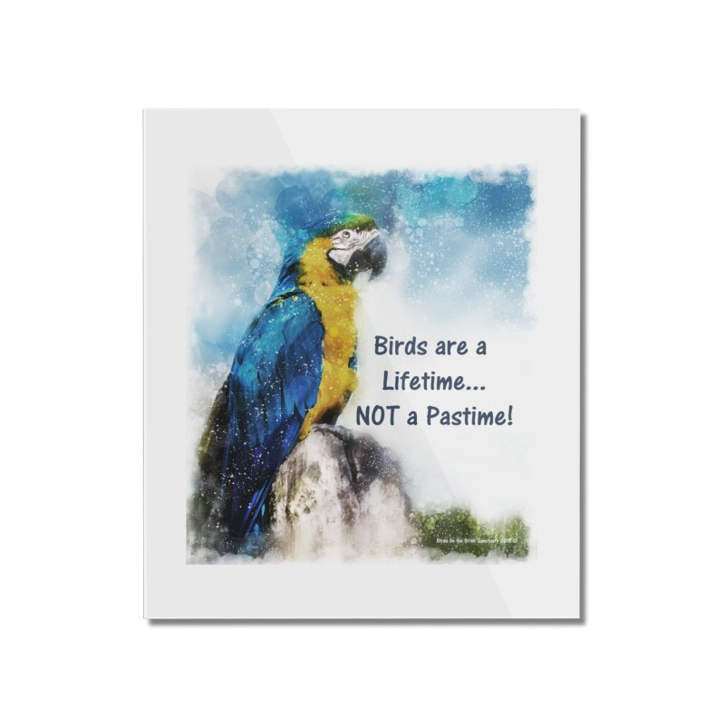 Macaw - Birds are a Lifetime, NOT a Pastime! Home Mounted Acrylic Print by Birds on the Brink Sanctuary Shop