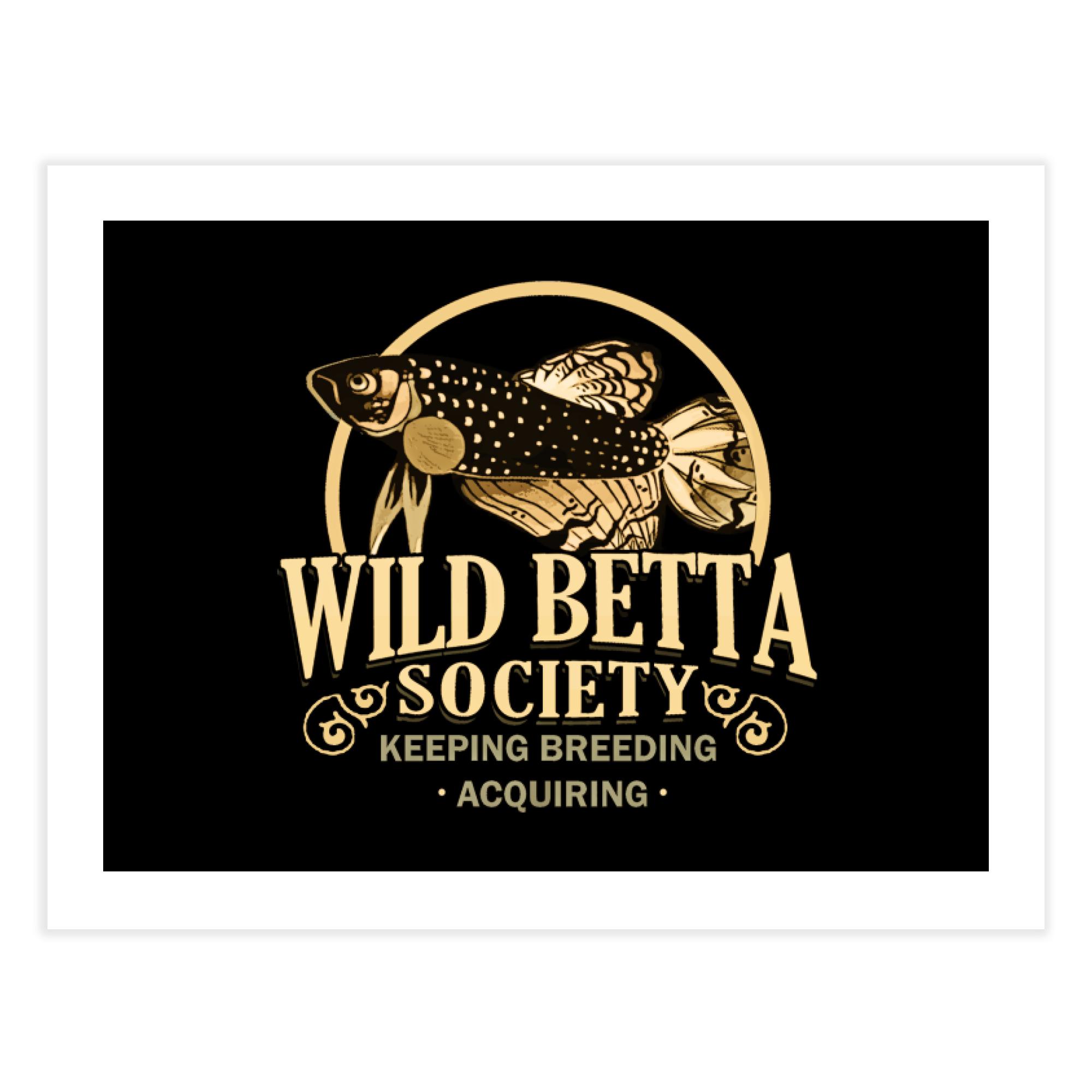 Wild Betta