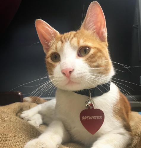 Brewster-The-Brew-Cat