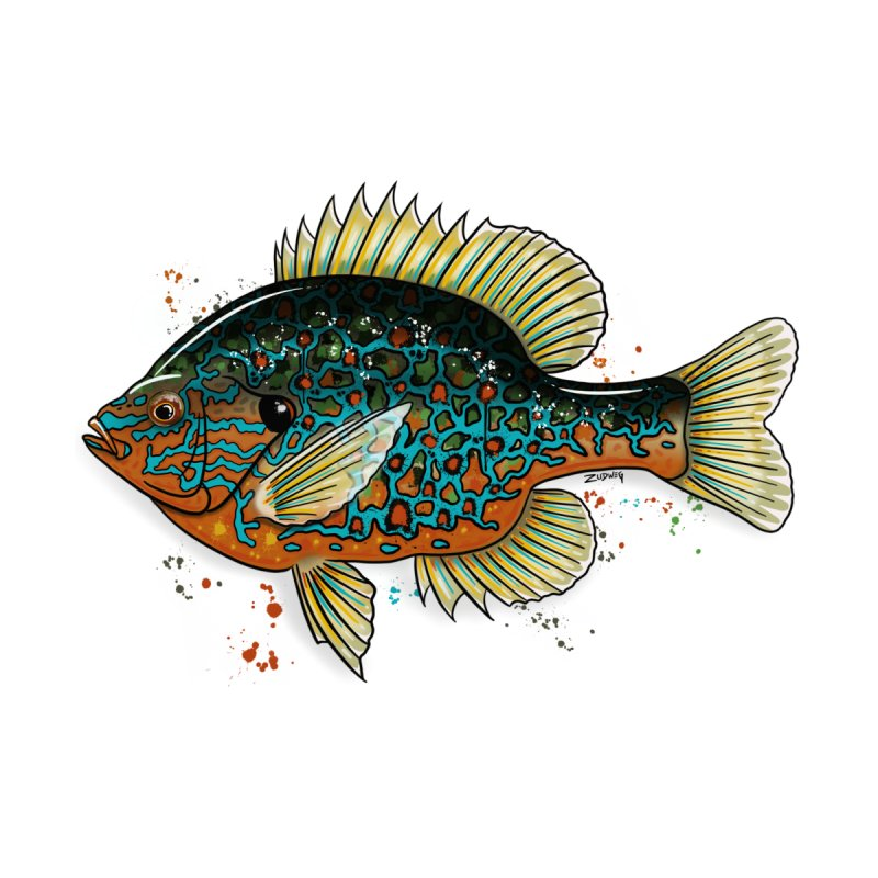 Pumpkinseed 2018 - Fine Art Print Home Framed Fine Art Print by Boneyard Studio - Boneyard Fly Gear