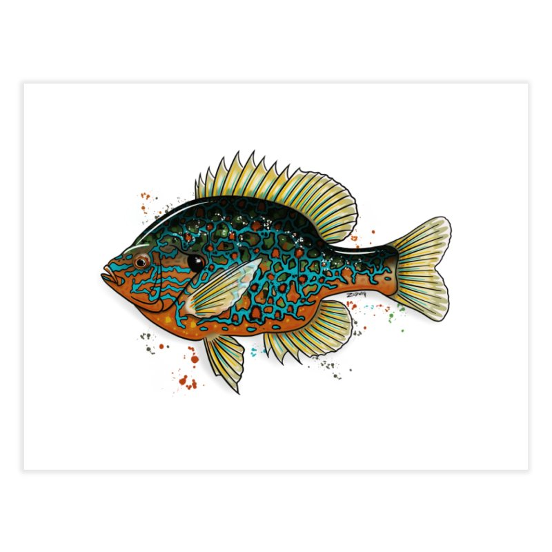 Pumpkinseed 2018 - Fine Art Print Home Fine Art Print by Boneyard Studio - Boneyard Fly Gear