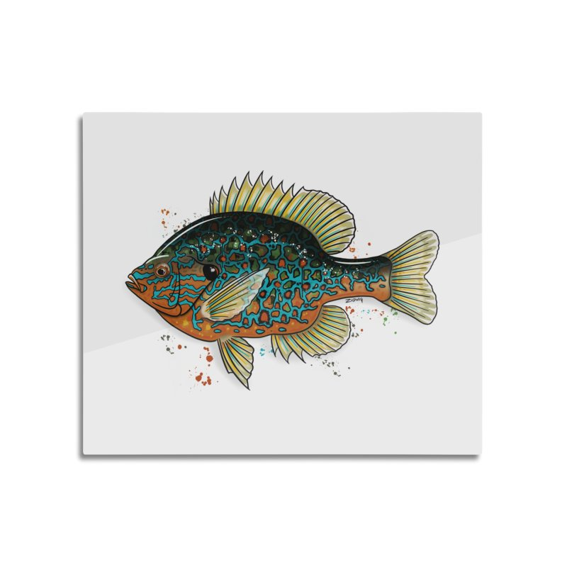 Pumpkinseed 2018 - Fine Art Print Home Mounted Aluminum Print by Boneyard Studio - Boneyard Fly Gear
