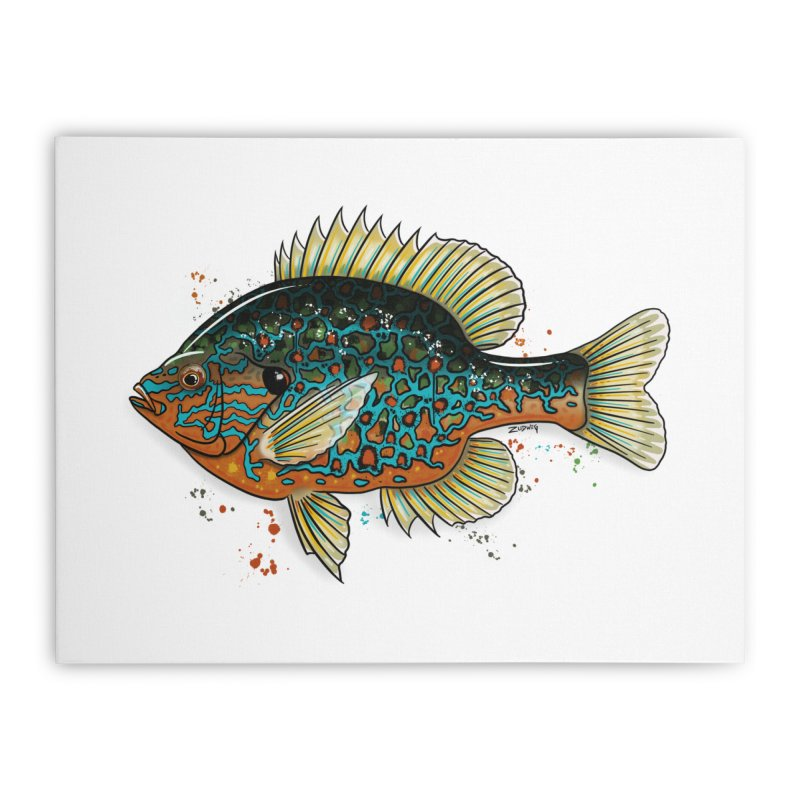 Pumpkinseed 2018 - Fine Art Print Home Stretched Canvas by Boneyard Studio - Boneyard Fly Gear
