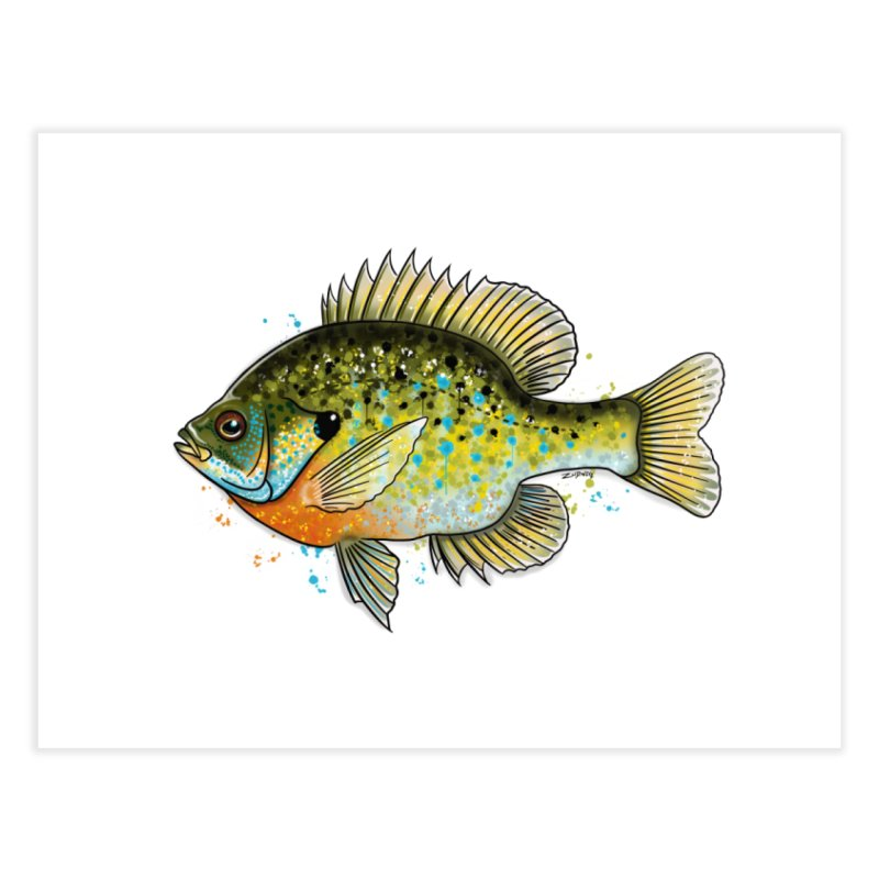 Bluegill 2018 - Fine Art Print Home Fine Art Print by Boneyard Studio - Boneyard Fly Gear