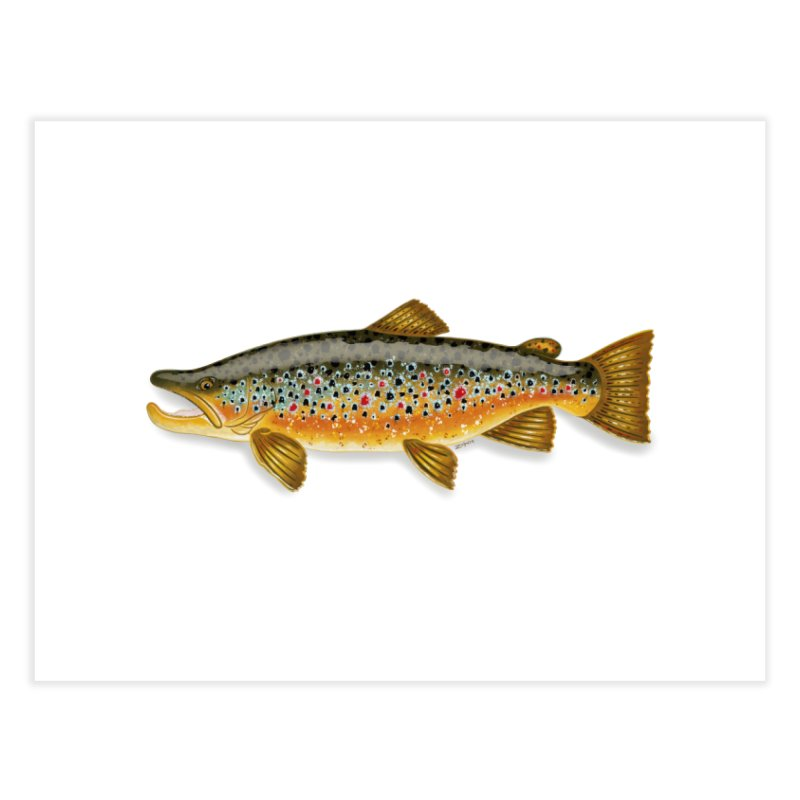 Brown Trout 2018 - Fine Art Print Home Fine Art Print by Boneyard Studio - Boneyard Fly Gear
