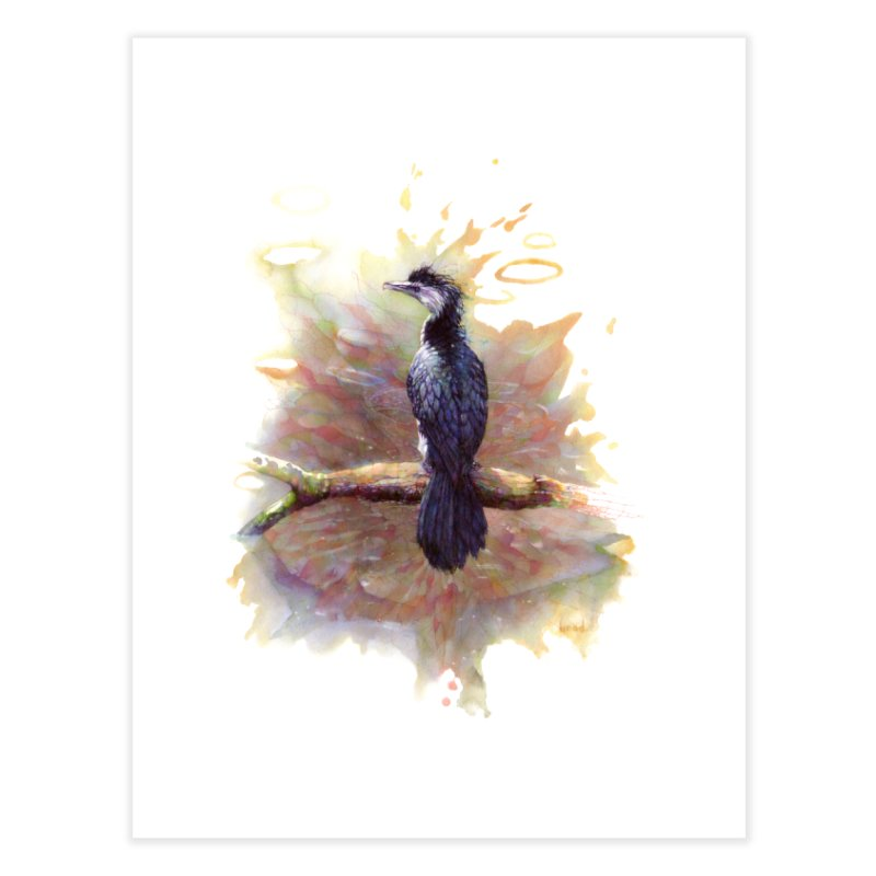 Pied Cormorant   by BradGresham's Artist Shop