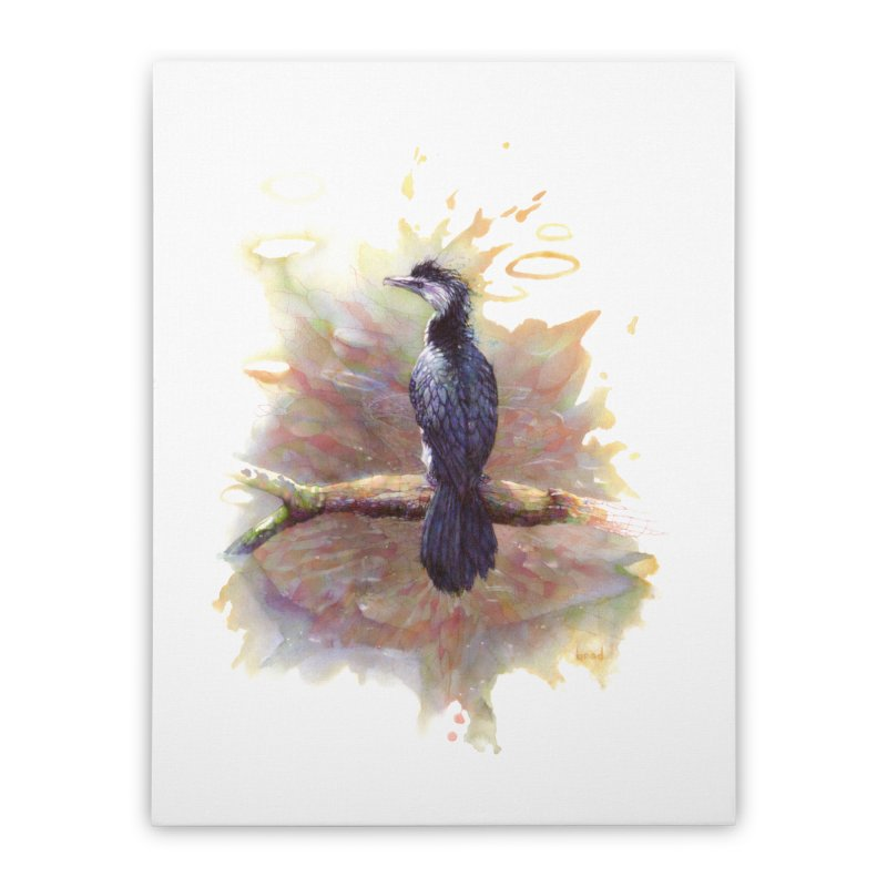 Pied Cormorant Home Stretched Canvas by BradGresham's Artist Shop
