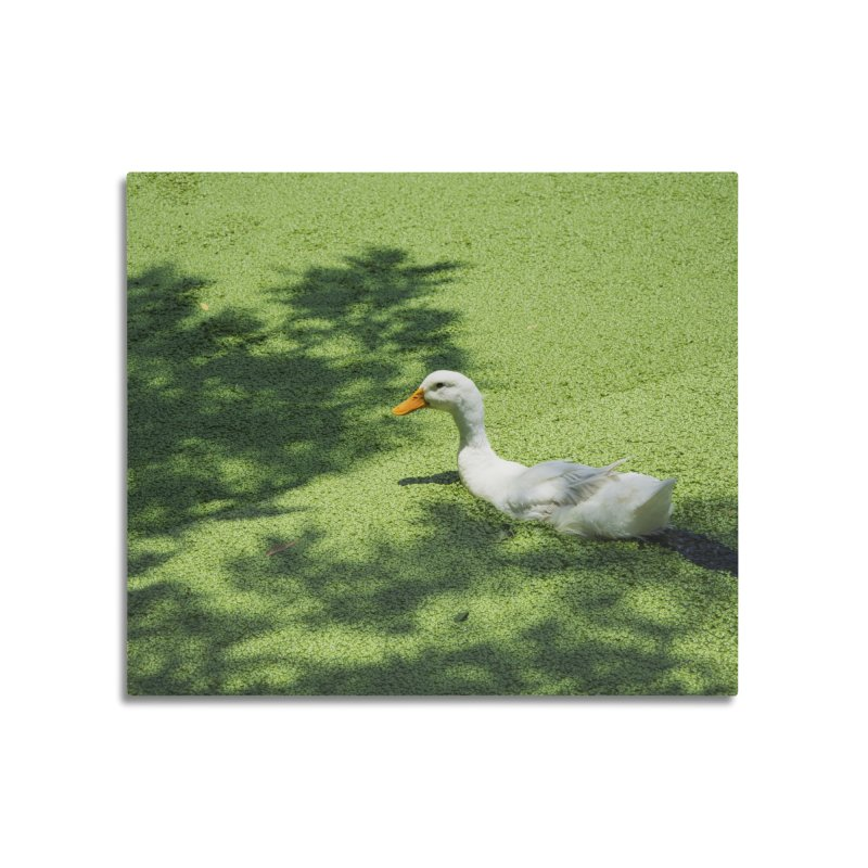 Duck over green peas Home Mounted Aluminum Print by BrocoliArtprint