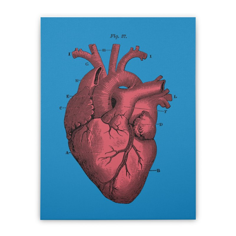 Vintage Anatomy Heart Home Stretched Canvas by The Digital Crafts Shop