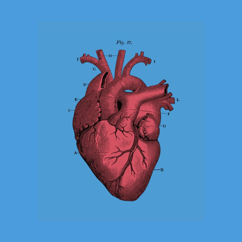 Vintage Anatomy Heart Illustration by The Digital Crafts Shop