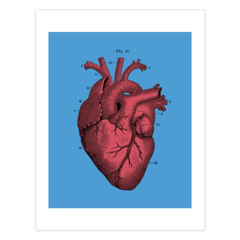 Vintage Anatomy Heart Illustration Home Fine Art Print by The Digital Crafts Shop