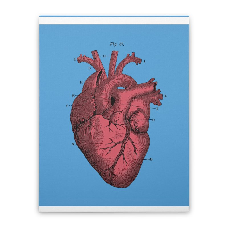 Vintage Anatomy Heart Illustration Home Stretched Canvas by The Digital Crafts Shop