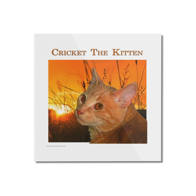 Cricket The Kitten Home Mounted Acrylic Print by Every Drop's An Idea's Artist Shop