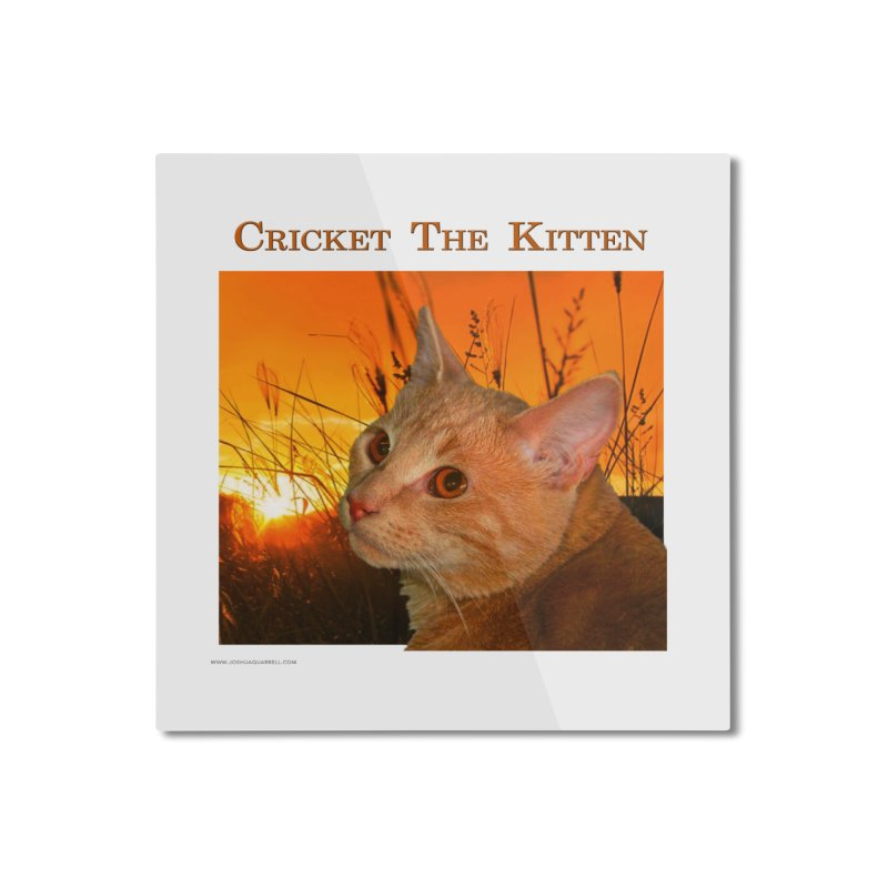 Cricket The Kitten Home Mounted Aluminum Print by Every Drop's An Idea's Artist Shop