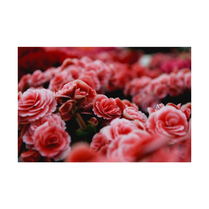 Flc pink flowers pink flowers mightylinksfo Choice Image