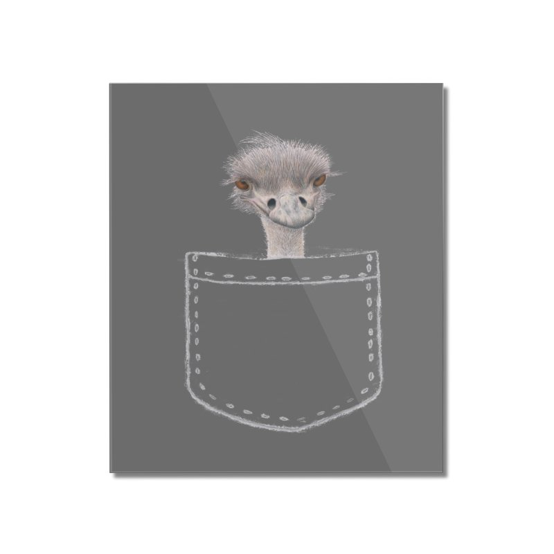 Ostrich in my Pocket Home Mounted Acrylic Print by All Fashioned by Nature Artist Shop