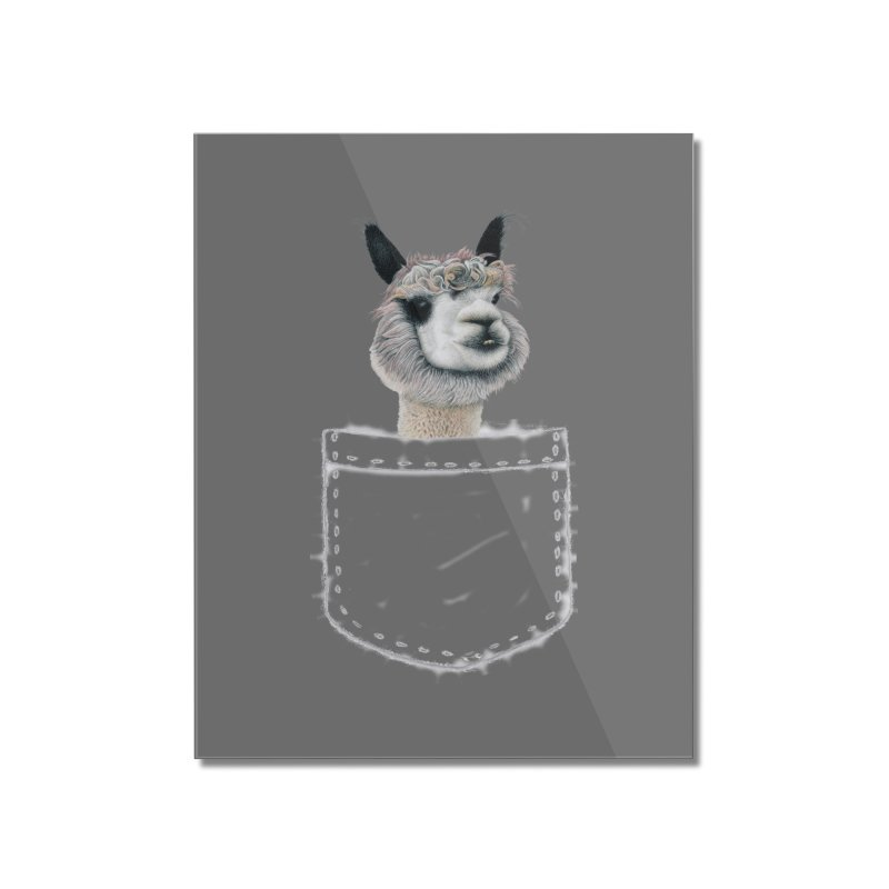 Alpaca In My Pocket Home Mounted Acrylic Print by All Fashioned by Nature Artist Shop