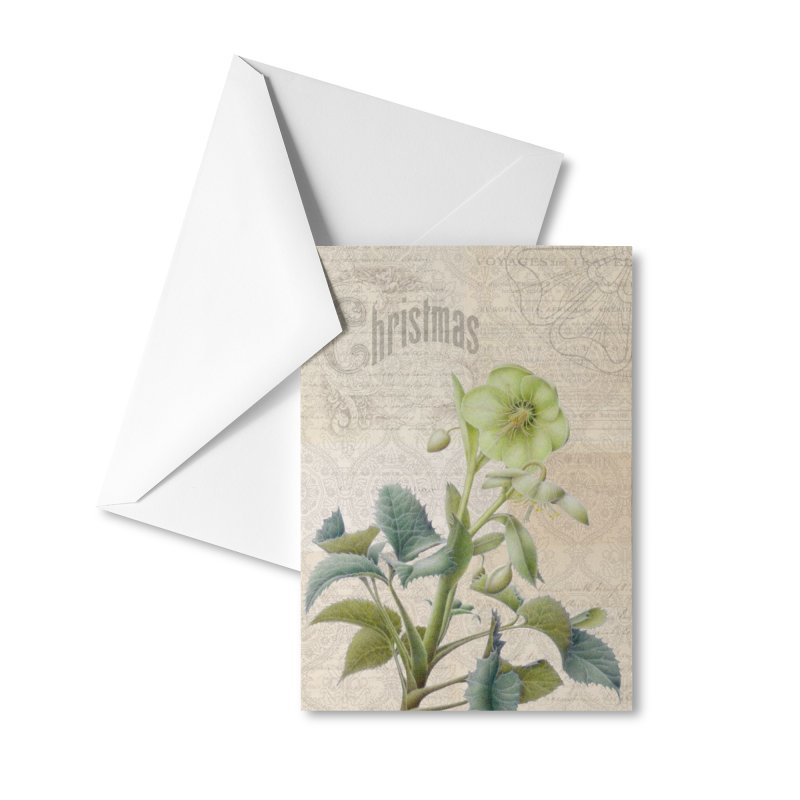 Hellebore Christmas Card Accessories Greeting Card by All Fashioned by Nature Artist Shop