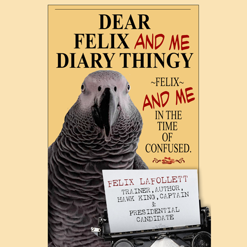Dear-Felix-And-Me-Diary-Thingy