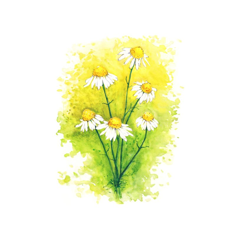 Chamomile Home Tapestry by HoneyGherkin's Artist Shop
