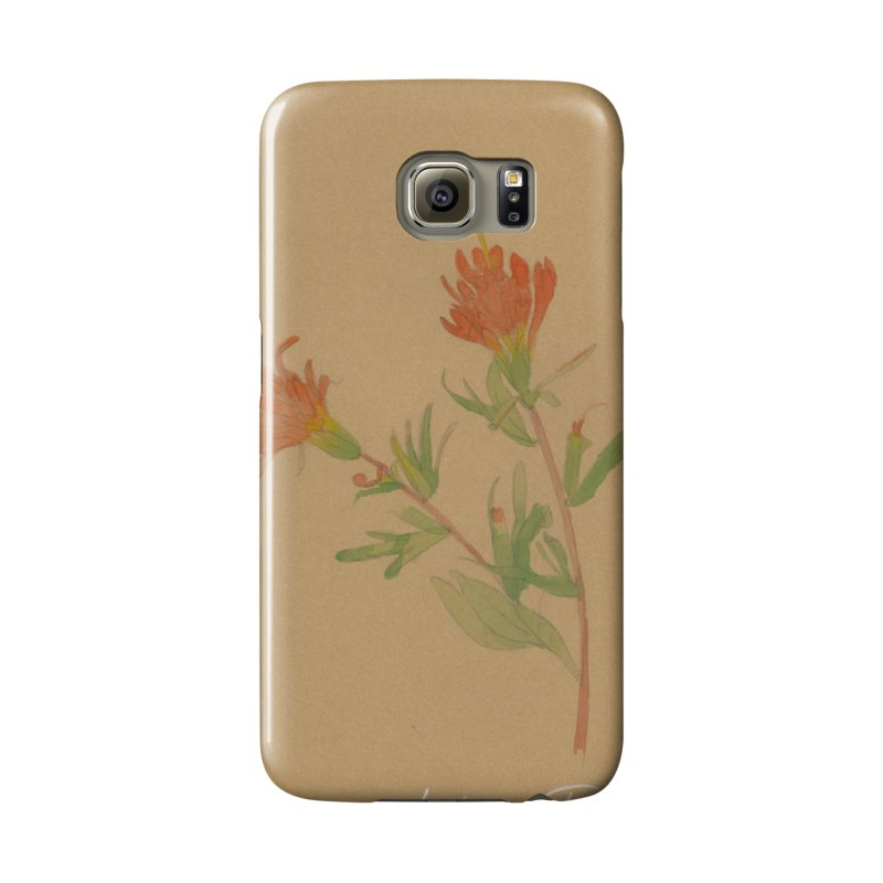 Indian Paintbrush Accessories Phone Case by Jess Love