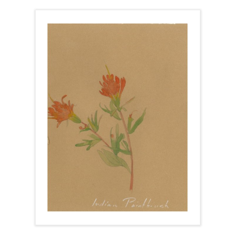 Indian Paintbrush Home Fine Art Print by Jess Love