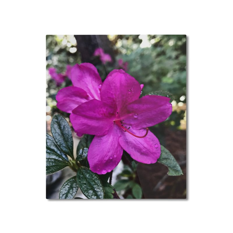 Pink Flower 3 Home Mounted Aluminum Print by Karmic Reaction Art