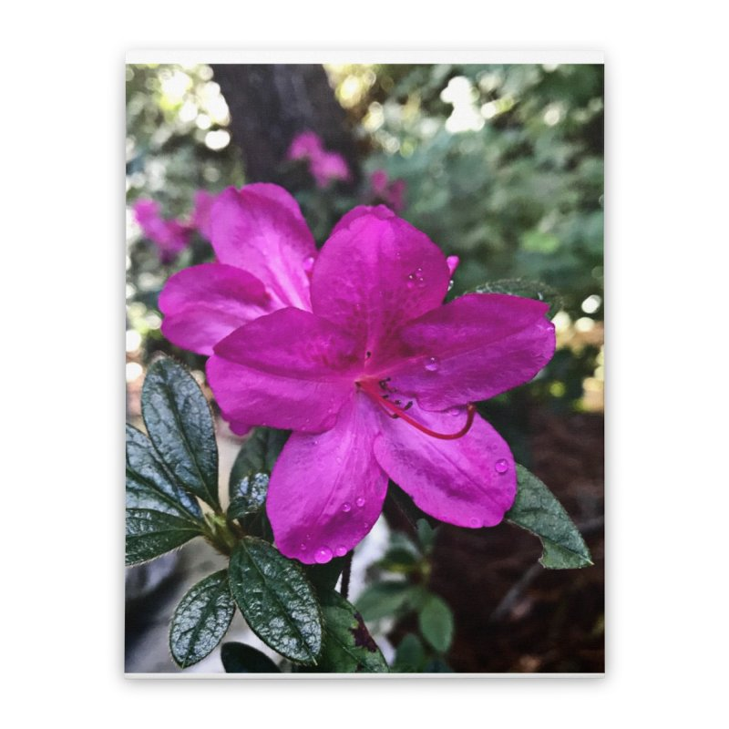 Pink Flower 3 Home Stretched Canvas by Karmic Reaction Art