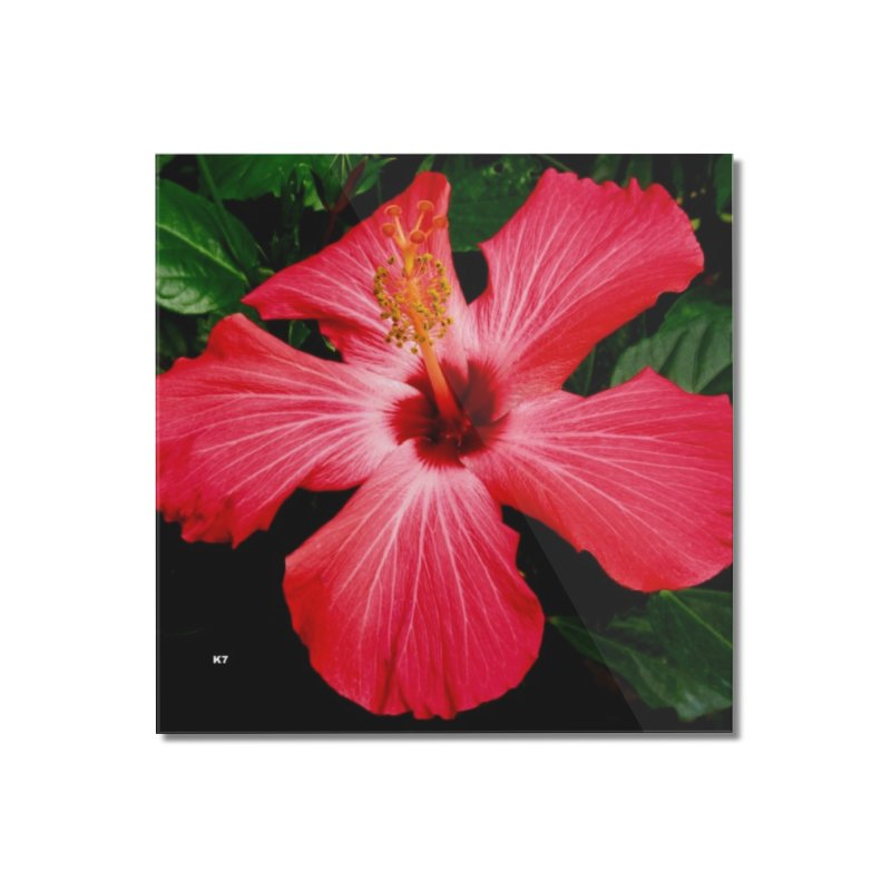 Red Flower Home Mounted Acrylic Print by Karmic Reaction Art