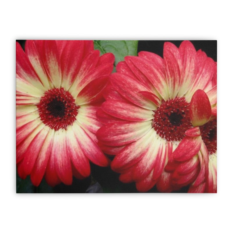 Red and Yellow Flowers Home Stretched Canvas by Karmic Reaction Art