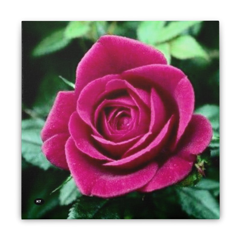 Rose 1 Home Stretched Canvas by Karmic Reaction Art