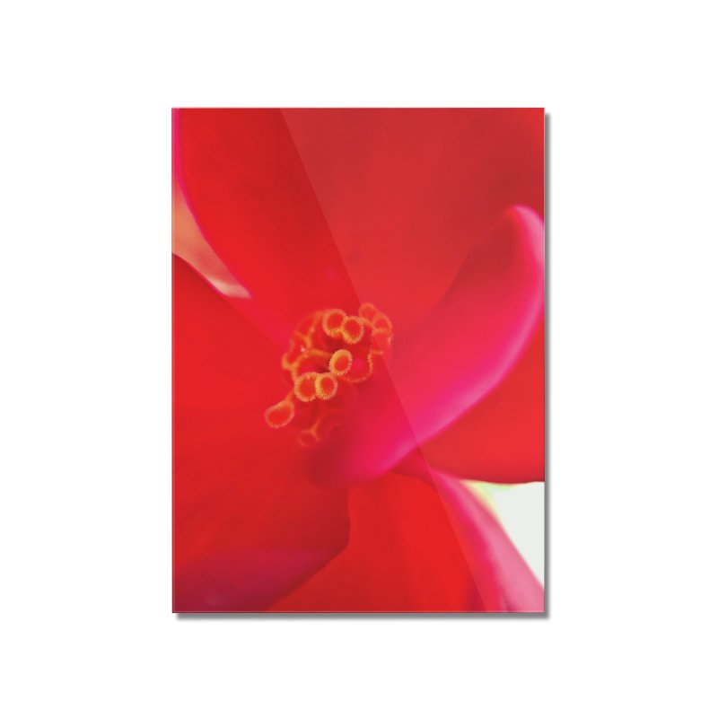 Red Flower 1 Home Mounted Acrylic Print by Katie Schutte Art