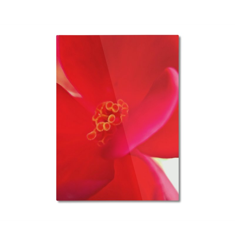 Red Flower 1 Home Mounted Aluminum Print by Katie Schutte Art