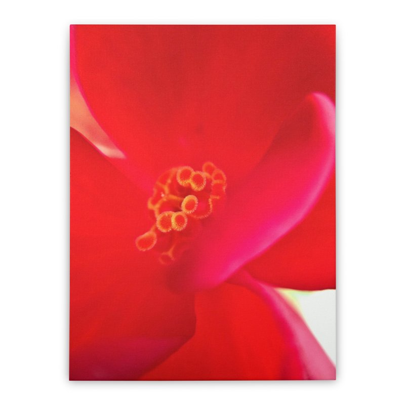 Red Flower 1 Home Stretched Canvas by Katie Schutte Art