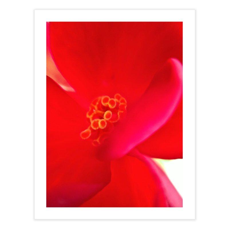 Red Flower 1 Home Fine Art Print by Katie Schutte Art