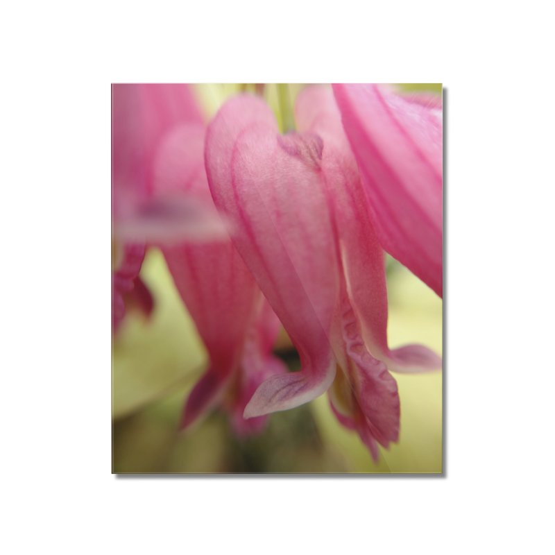 Bleeding Heart Home Mounted Acrylic Print by Katie Schutte Art