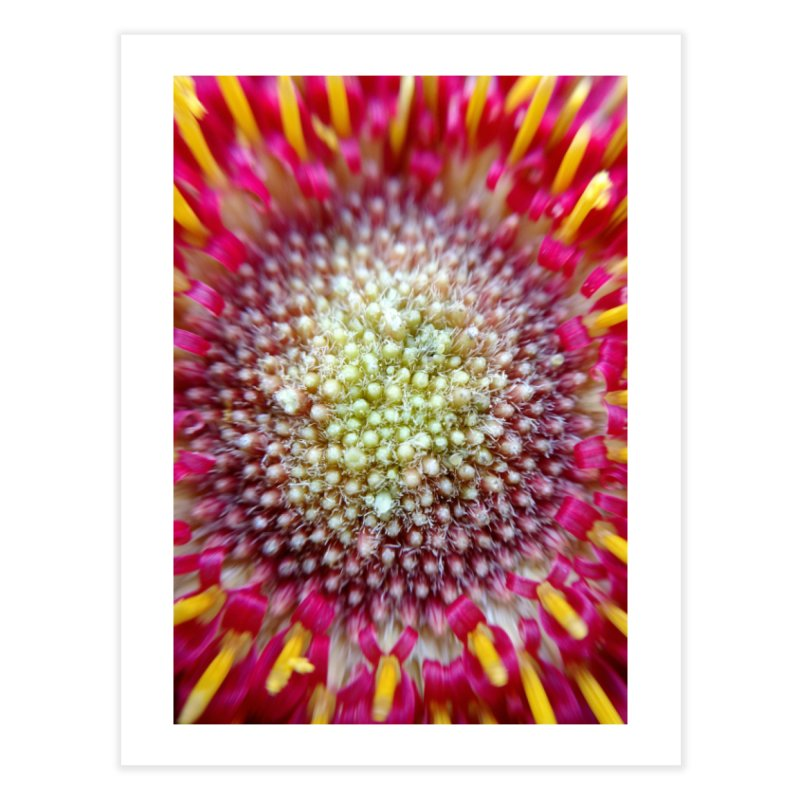 Burst Home Fine Art Print by Katie Schutte Art
