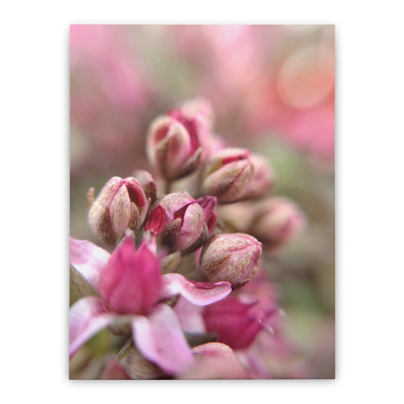 Cluster Buds Home Stretched Canvas by Katie Schutte Art