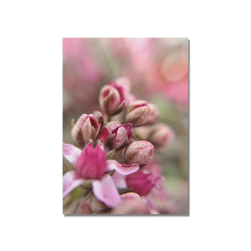 Cluster Buds Home Mounted Acrylic Print by Katie Schutte Art