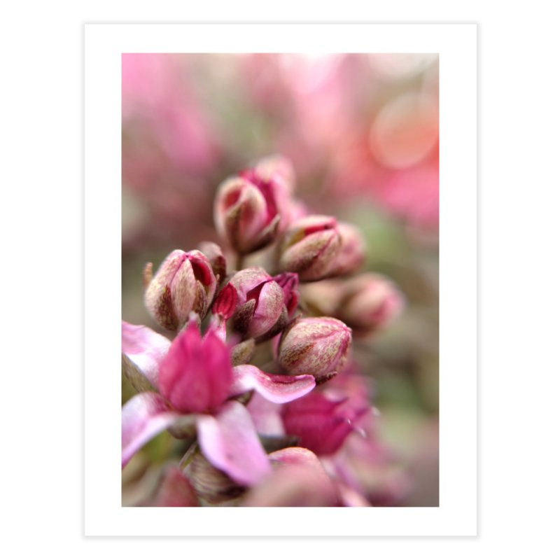 Cluster Buds Home Fine Art Print by Katie Schutte Art
